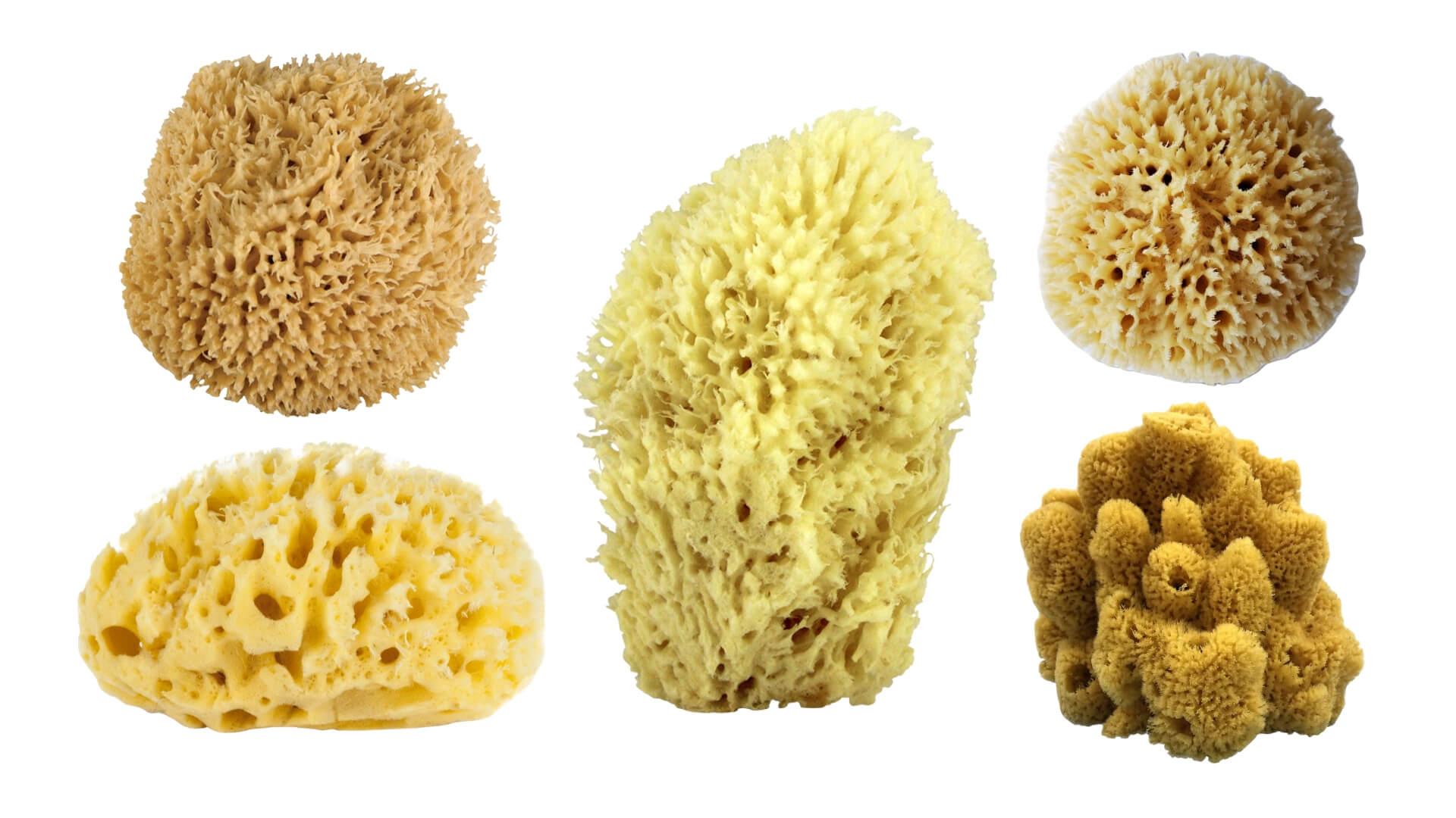 mejor-esponja-marina