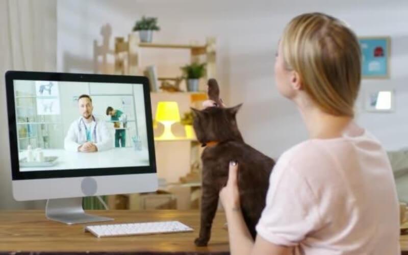 farmacias veterinarias-online-en-españa